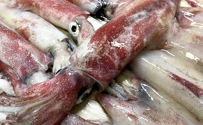 極上美味イカをルアー感覚で楽しめる、マイカの夜釣りで真夏の夕涼み