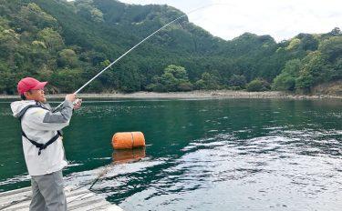 初夏のイカダからヤエン仕掛けで大型アオリイカを迎撃!【三重県白石湖】
