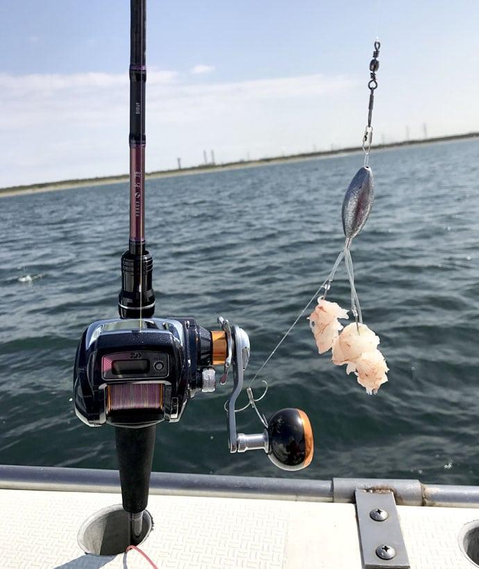 夏からが楽しい!ぷりっぷりの白子を求めて、ショウサイフグのカットウ釣り