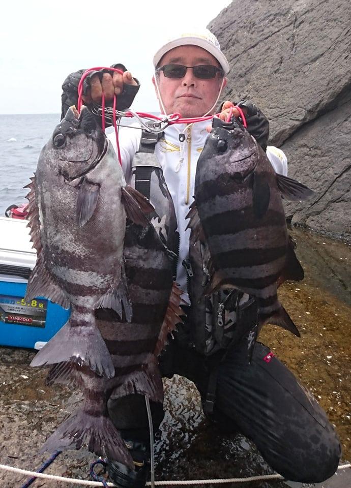 ヒナダンの朝釣りでイシダイ3匹
