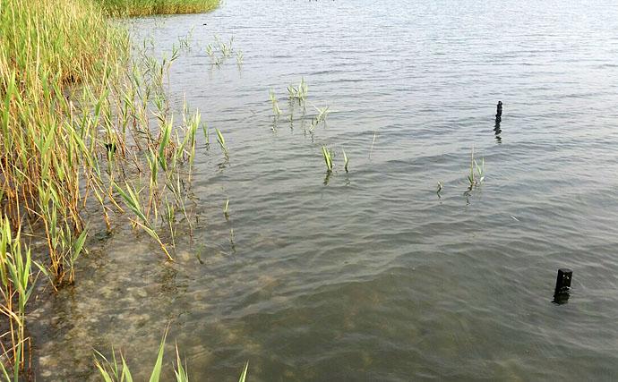 ハゼクランクフィッシングの基本的な釣り方と狙い目のポイント