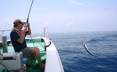 夏真っ盛りから熱くなる!テンヤで狙う大阪湾の船タチウオ【釣り方編】