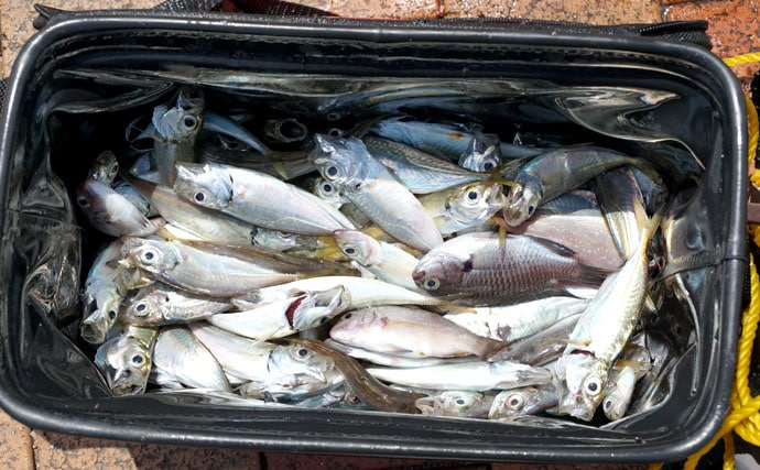 家族で大盛り上がりサビキで好釣!【福岡県北九州市日明・海峡釣り公園】