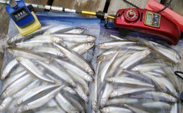 ワカサギ釣り解禁1週間の赤城で良型主体の数釣り堪能【群馬県赤城大沼】