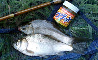 穏やかな秋にのんびり水路のマブナ釣り【千葉県柏市布瀬新田のホソ】