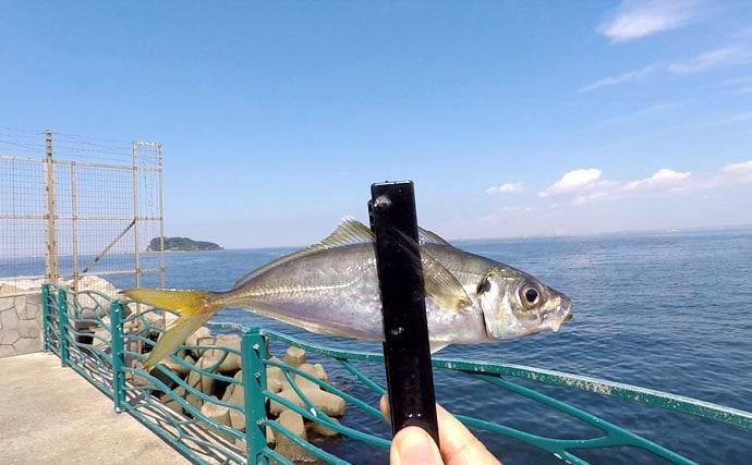 気軽に海釣りを楽しむならやっぱりここ【神奈川県横須賀海辺つり公園】