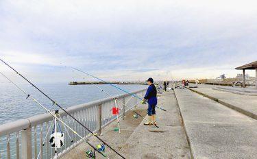 西へ東へ潮がわり。コンコン、グイーッと38cmマコガレイ【兵庫県林崎漁港】