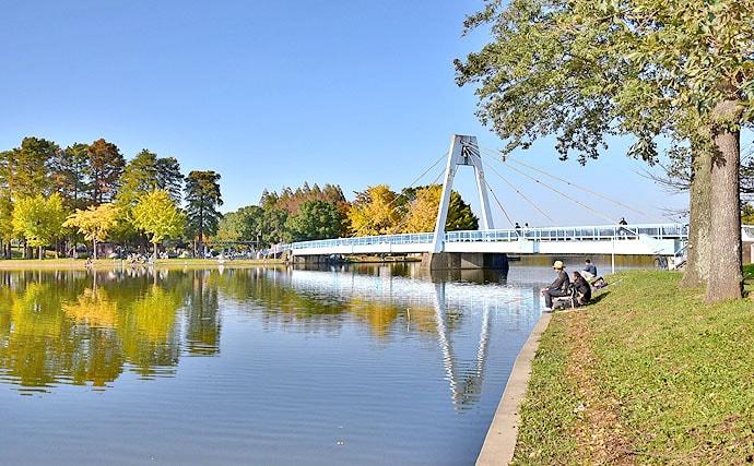 秋空の下、紅葉を感じながら下町の水郷水元公園で小物釣りを楽しもう!