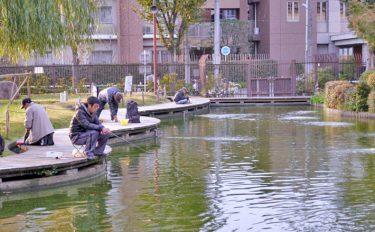 都会でキンギョ釣り。魚影濃く23尾と堪能【東京都浮間つり掘公園】