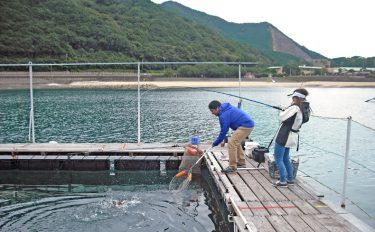 海の釣り堀を徹底攻略!キホンの釣り方・タックルをまるっと解説