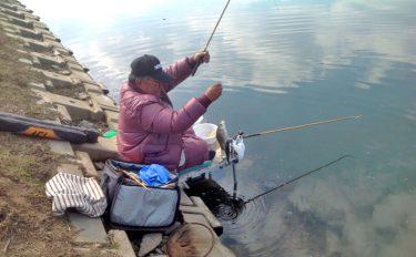 魚影濃厚!冬も元気な合志川でヘラブナ釣り【熊本県合志川】