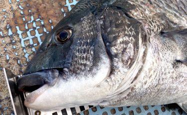 濃厚クリーミー!?厳寒期のカセ釣りでの新定番カキチヌ釣法【概要編】