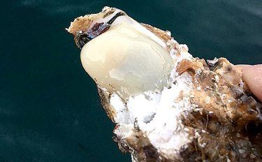 濃厚クリーミー!?厳寒期のカセ釣りでの新定番カキチヌ釣法【釣り方編】