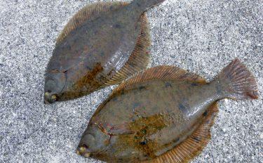 カレイの投げ釣りでオススメの釣り場を紹介&解説【淡路島佐野新島北波止】