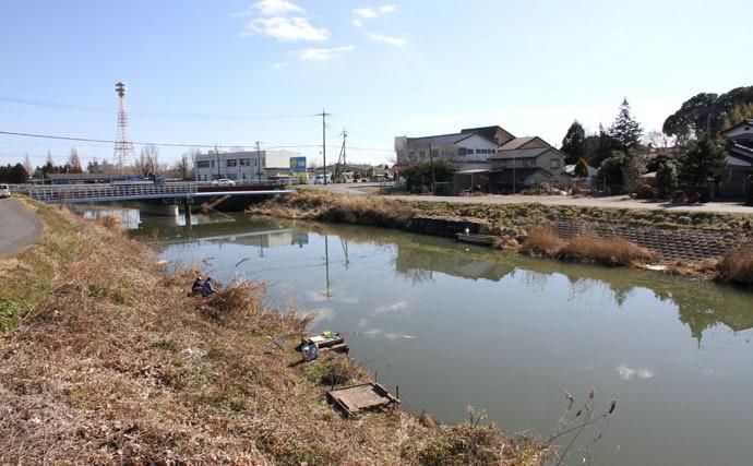 春は霞から。関東ヘラブナ今週の推薦釣り場【茨城県花室川】