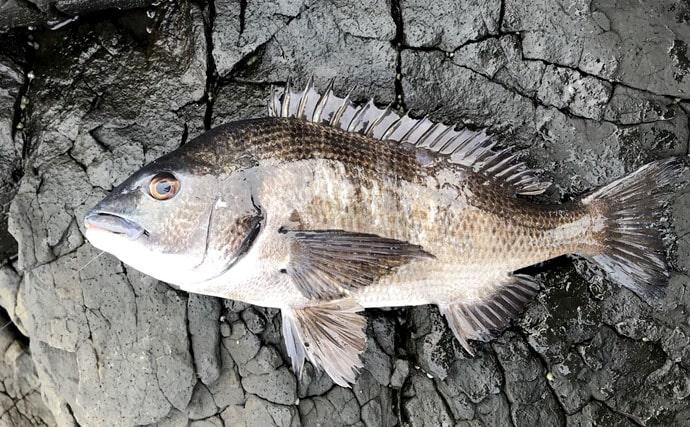 漁師直伝の極意教えます!血抜きと神経締めで魚を劇的に美味しく持ち帰ろう