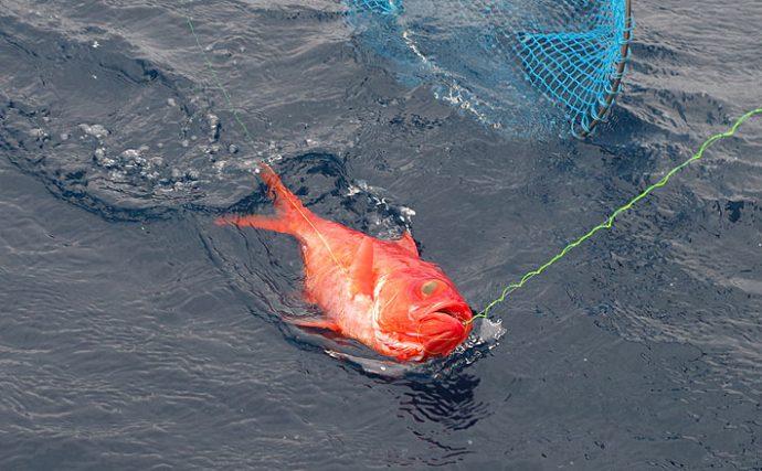 キンメダイ釣りの基本を確認しよう!【初島・伊豆諸島新島沖】