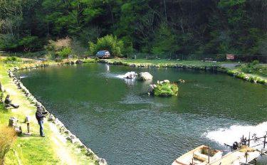 管理釣り場で楽しむフライフィッシング【東京都・浅川国際マス釣場】
