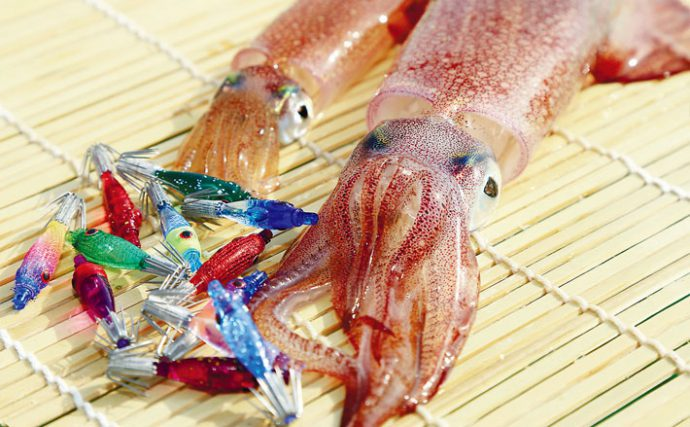 船釣りでマルイカ狙い。ゼロテン釣法のタックル選びと釣り方を徹底解説!