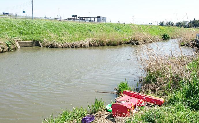 魅惑の水路!腹パン40cmのヘラブナがお目見え【千葉県香取郡・浄光川】
