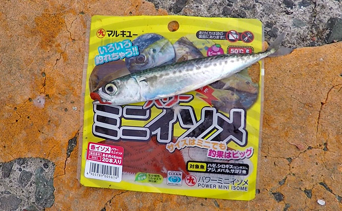 電車で釣りに行こう!手軽に楽しく小サバ100尾超え【神奈川県・江ノ島】