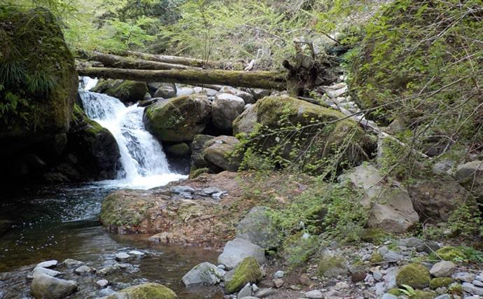 生命感溢れる新緑の渓流を満喫。アマゴ釣りを楽しむ【静岡県・狩野川】