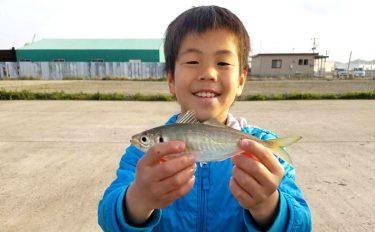 魚種が豊富!波止釣りオススメ釣り場【佐賀県伊万里市・名村公園】