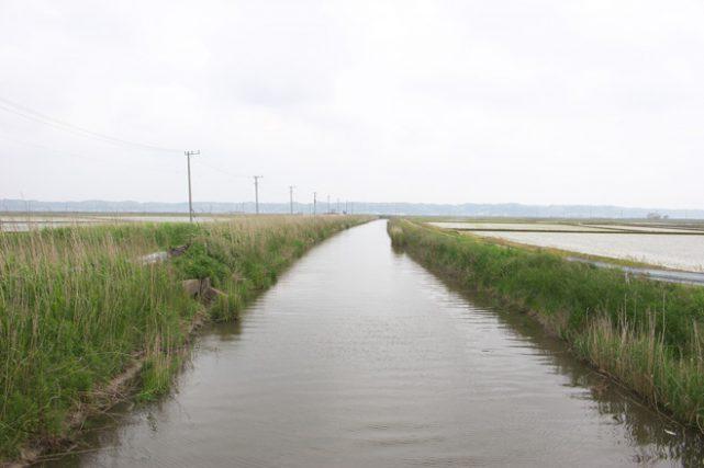 今週の関東ヘラブナ推薦釣り場【千葉県・七間川】
