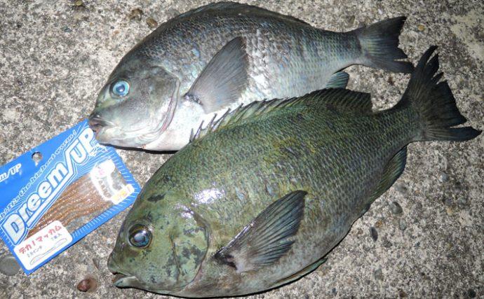 磯釣り釣行:ワームでメジナを釣る!【和歌山県・新宮の地磯】