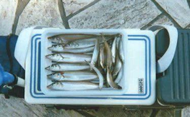 投げ釣り釣行:シロギス求めて釣り場めぐり【静岡県・清水エリア】