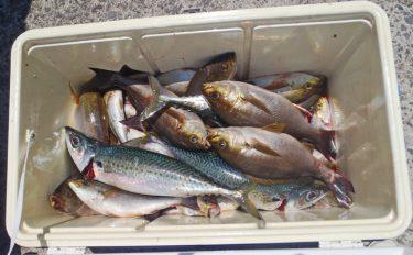 船イサキ釣行:入れ食い&42cm良型も!【和歌山県・日ノ岬沖】
