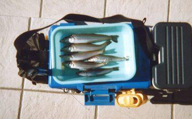 シロギス釣行:波止からのんびり投げ釣り【静岡県・沼津港】