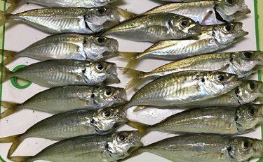 ナイトアジング釣行:ランガンで30尾【北九州市・日明海峡釣り公園】