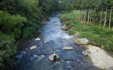 鮎トモ釣り:引き強烈!型ぞろい61尾手中【岐阜県・飛騨川水系】