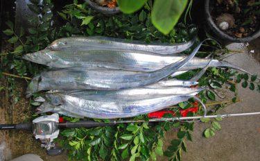船タチウオ釣行:エサ釣りで指6本サイズを狙う!【東京湾・吉野屋】