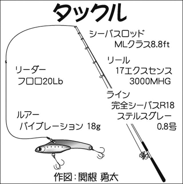 ルアーシーバス釣行:大会本番ラストでドラマが!【東京都・荒川】