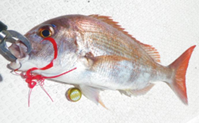 タイラバ釣行:状況渋く拾い釣りで美マダイ【徳島県・鳴門海峡】
