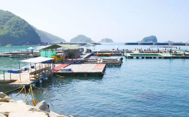 《夏休みオススメ》海上釣堀釣行:初心者でも高級魚【三重県・正徳丸】
