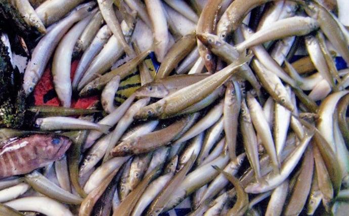 シロギス投げ釣り:2日間で釣り場巡り本命150尾!【長崎県・対馬】
