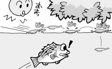 初心者向け!バスフィッシング用語講座vol.3【イラスト付き解説】