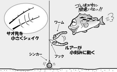 初心者向け!バスフィッシング用語講座vol.4【イラスト付き解説】