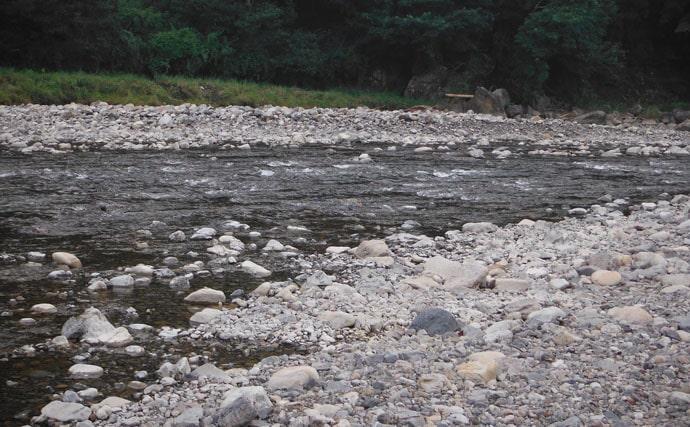 鮎トモ釣り:目印吹っ飛ぶアタリで良型20cm【和歌山県・富田川】