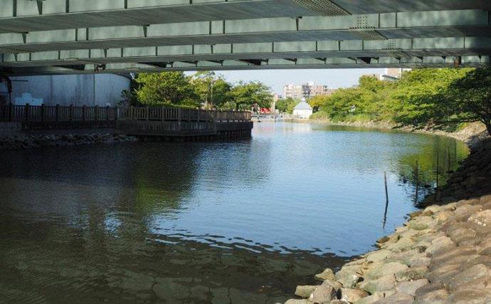 テナガエビ釣行:夕涼みで23尾の好釣果【東京都・新左近川親水公園】