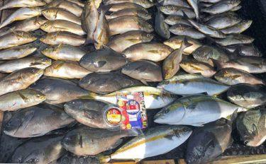 完全フカセ沖釣り:本命ヒラマサに95cmブリも!【福井県・玄達瀬】