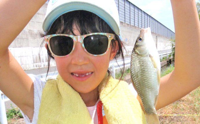 淡水小物釣り:近所の用水路でも色んな魚釣れたよ!【愛知県・稲沢市】