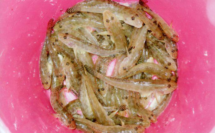 エサハゼ釣行:本命54尾の嬉しい&美味しい釣果!【三重県・楠漁港】