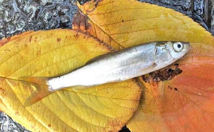 エサハゼ釣行:下町風情残る釣り場で大小のハゼと遊ぶ【東京都・佃堀】