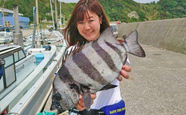 石鯛かかり釣り:バイキングリールで強引と対峙!【神奈川県・鈴米丸】