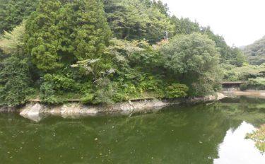 今週のヘラブナ推薦釣り場【埼玉県・鎌北湖】