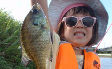 子供と淡水小物釣り:入れパクで釣りガール覚醒!?【愛知県・鷹場池】